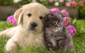 pics-of-cute-cats-and-dogs-1